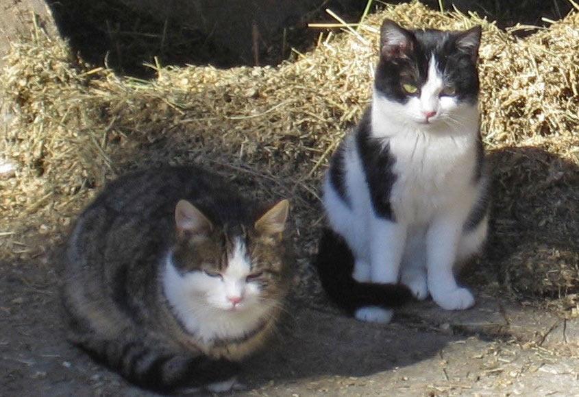 Tierarztpraxis in Münsing - Behandlung Katzen