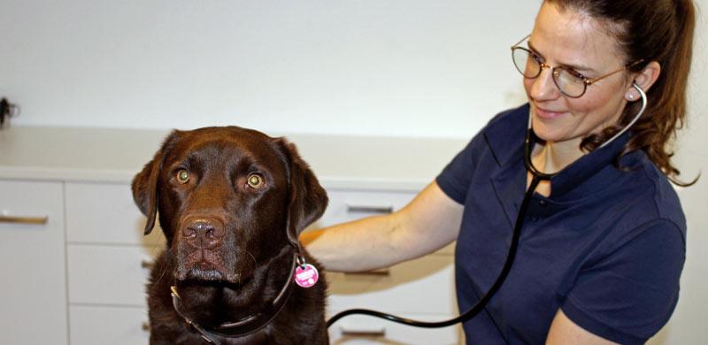 Tierarztpraxis Münsing